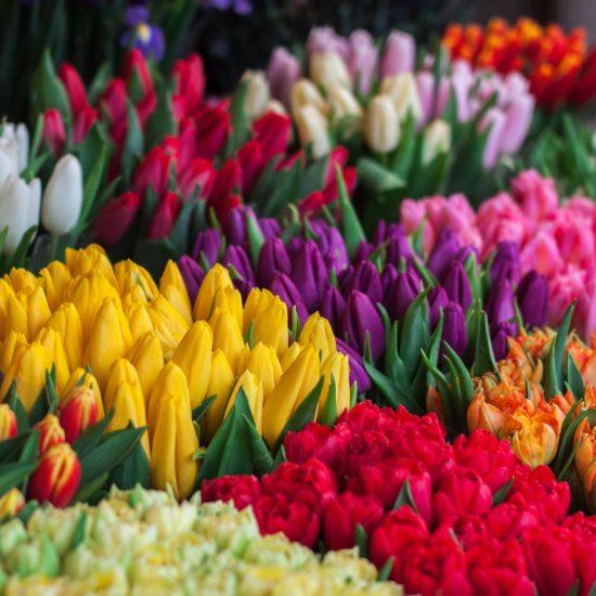 【街中が花だらけ!】オタワのチューリップフェスティバルを大紹介!