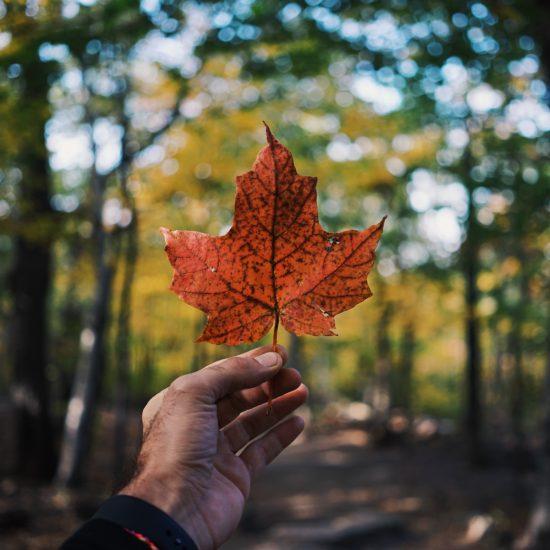 【体験談】カナダに留学するなら年末がおすすめな3つの理由